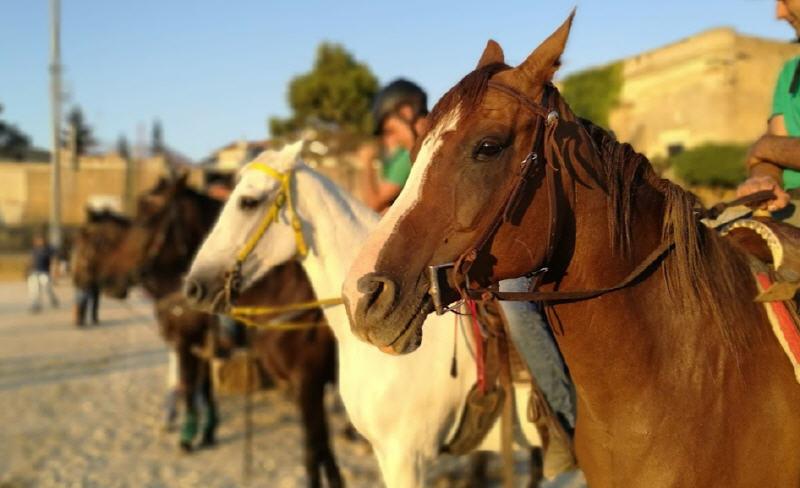 Piazza Armerina – Palio dei Normanni: le selezioni dei cavalieri. [VIDEO]