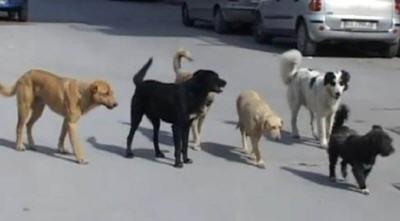 Piazza Armerina – Signora aggredita perché sfama dei cani: denunciato un uomo