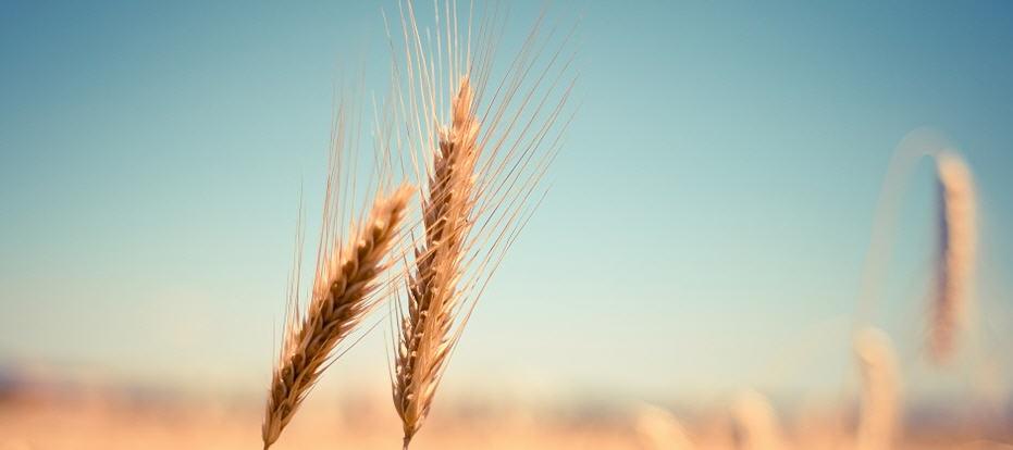 Palermo – Proroga fino al 31 dicembre 2021 dell'obbligo di indicazione dell'origine del grano
