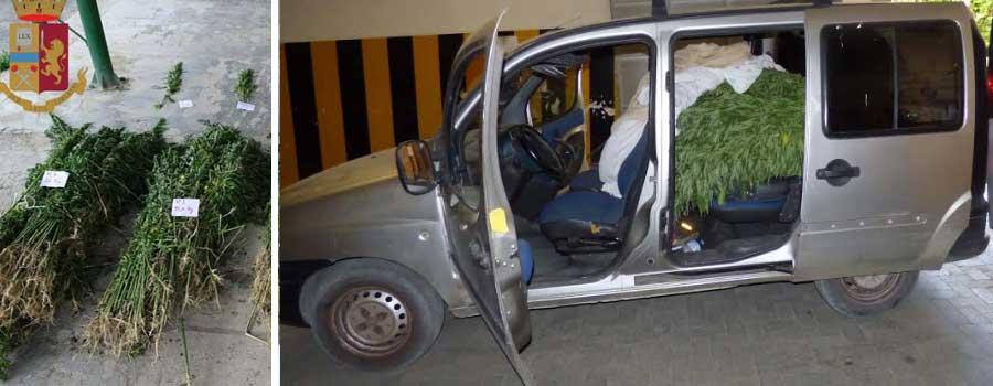 Piazza Armerina – La polizia blocca un furgone pieno di piantine di marijuana.