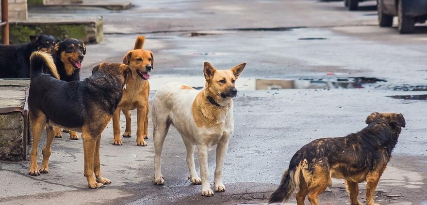 Piazza Armerina – Cani randagi nella zona Costantino, l'assessore Cugini convoca un tavolo tecnico.