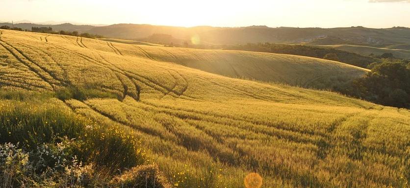 """Il webinar """"Per una visione di lungo periodo nelle zone rurali"""" organizzato dal Gal Rocca di Cerere"""