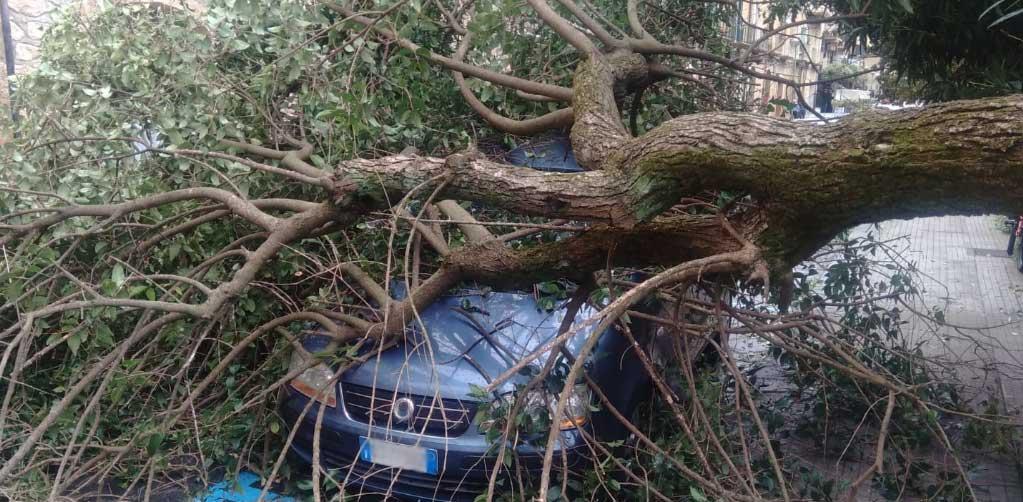 Piazza Armerina – Il vento abbatte un albero in via Roma