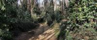 Piazza Armerina – Ordinanza del sindaco, chiusi i sentieri dei boschi Bellia