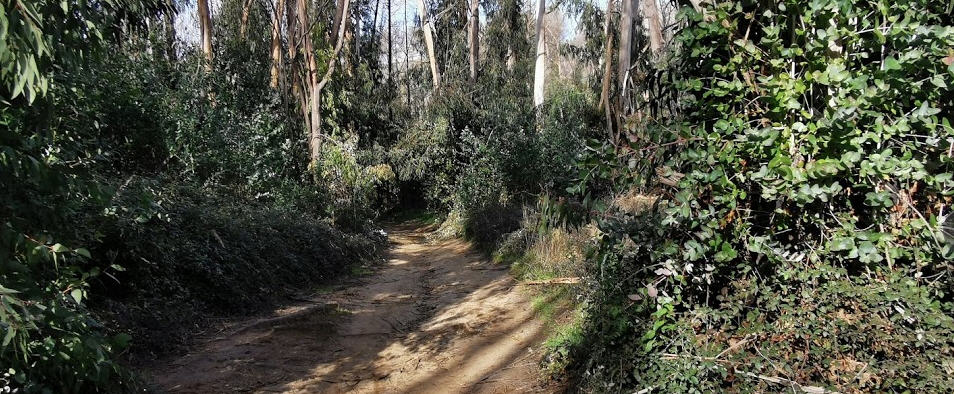 Piazza Armerina – Avviata la messa in sicurezza del percorso sportivo dei boschi Bellia