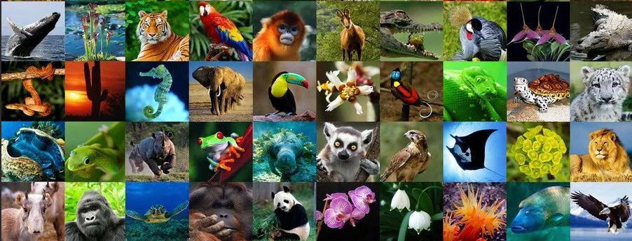 Enna – Celebrata la Giornata Internazionale della Biodiversità 2020