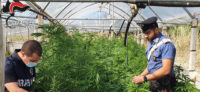 Piazza Armerina- Trovata coltivazione di marijuana in contrada Bessima nei pressi del lago Olivo