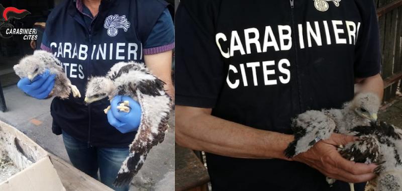 Carabinieri forestali, operazione in tutta Italia contro il bracconaggio di specie protette