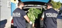 Piazza Armerina – La Polizia di Stato denuncia due persone per coltivazione di marijuana