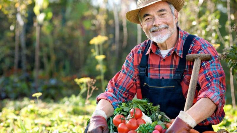 In arrivo da Bruxelles 660 milioni di euro per l'agricoltura siciliana