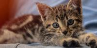 Piazza Armerina – Diecimila euro di multa per aver scalciato un gattino.