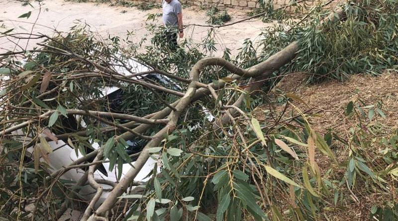 I danni del vento –  Grossi rami su auto posteggiate in via Trigona [VIDEO]