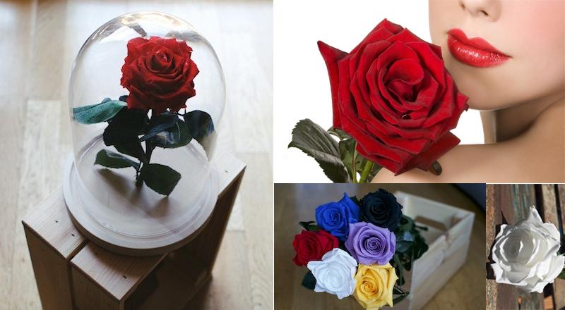 Un regalo originale? La rosa stabilizzata