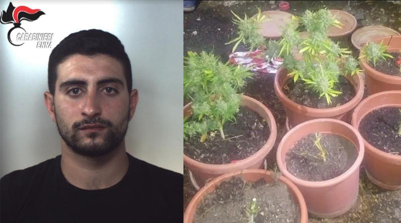 Regalbuto – Coltivava droga in un vecchio casolare : arrestato dai Carabinieri