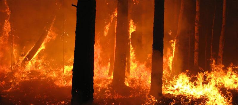 L'On Luisa Lantieri presenta un disegno di legge per combattere il fenomeno degli incendi boschivi