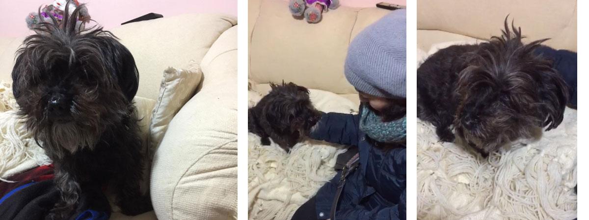 Piazza Armerina – La cagnolina Kelly veglia la padrona morta da 48 ore. Ora cerca casa.
