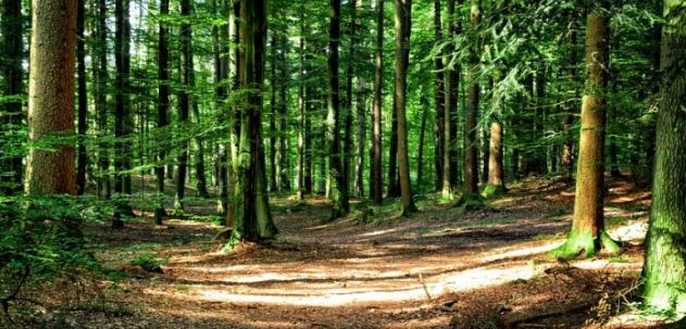 Nicosia – Denunciati in stato di libertà per furto aggravato di legname