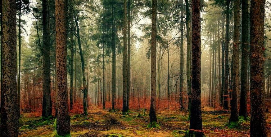 """Troina – Valorizzazione dei boschi: presentazione del progetto """"Quel fresco profumo di libertà"""