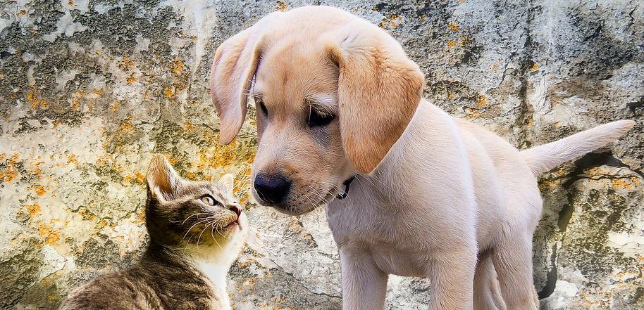 Piazza Armerina – Approvata la proposta di regolamento per la detenzione e la tutela degli animali