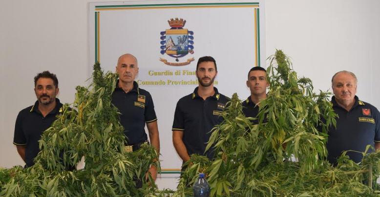 La Guardia di Finanza di Enna individua e sequestra una piantagione di marijuana