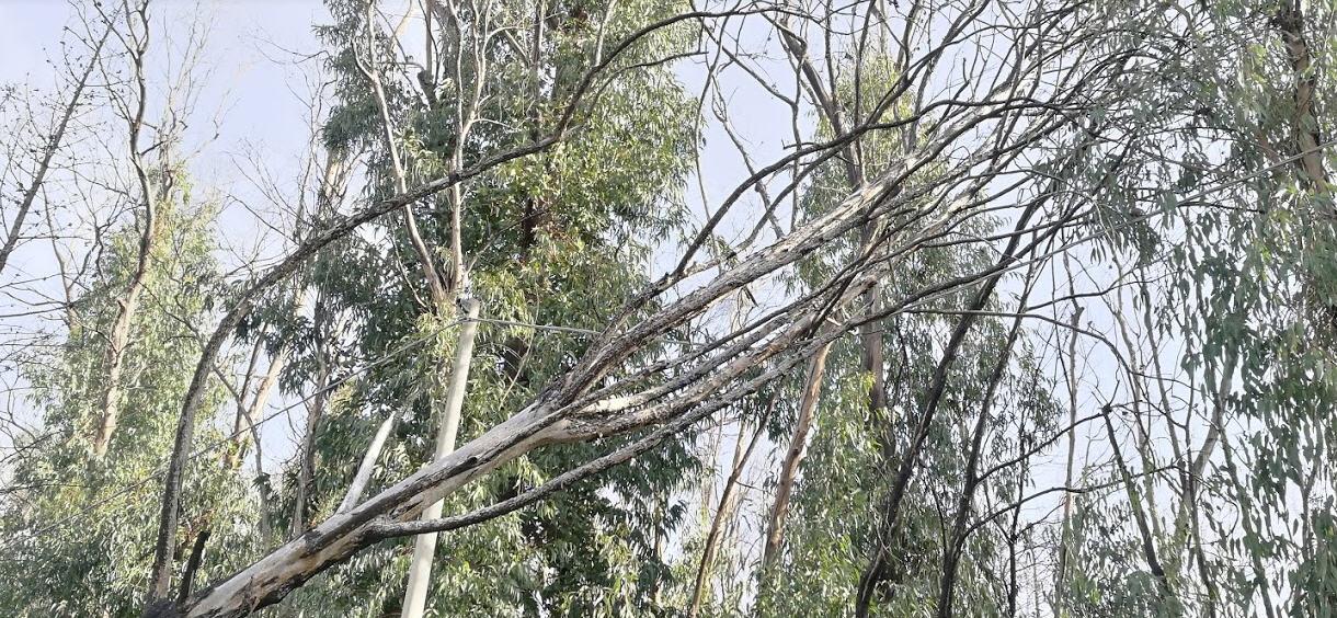 Piazza Armerina- Boschi Bellia: il sindaco dispone una verifica su potenziali rischi per la caduta di alberi