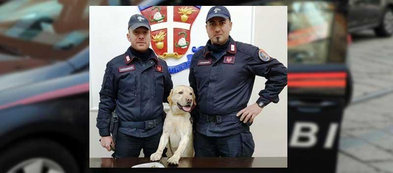 Enna – Controlli dei carabinieri: il cane Ivan trova hashish in un garage. Un giovane arrestato