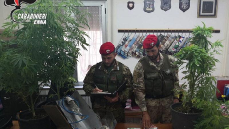Centuriupe: i carabinieri scovano un coltivazione di piante di marijuana