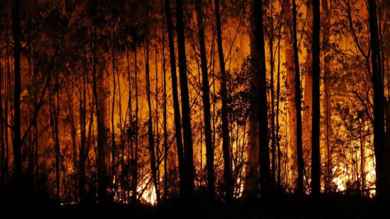 """Incendi in Sicilia, Luisa Lantieri (Ora – Sicilia al Centro): """"il governo agisca subito. A settembre il mio ddl in commissione"""""""