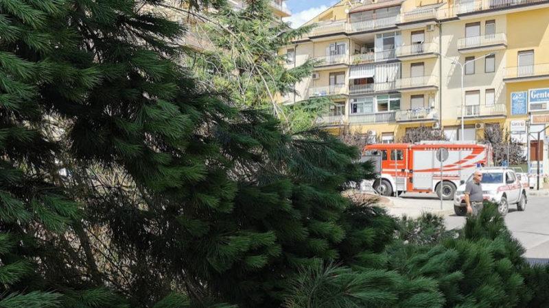 Piazza Armerina – Cade un grosso pino in piazza Caduti sul Lavoro. Nessun danno.