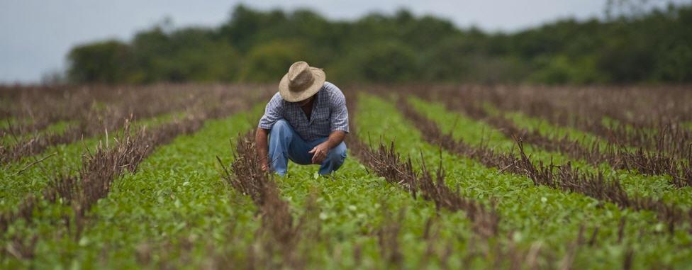 Inps – Agricoltura: esonero straordinario dal versamento dei contributi previdenziali e assistenziali