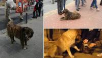 Piazza Armerina – La morte di Tigro, cane di città amico di tutti. Una statua per ricordarlo