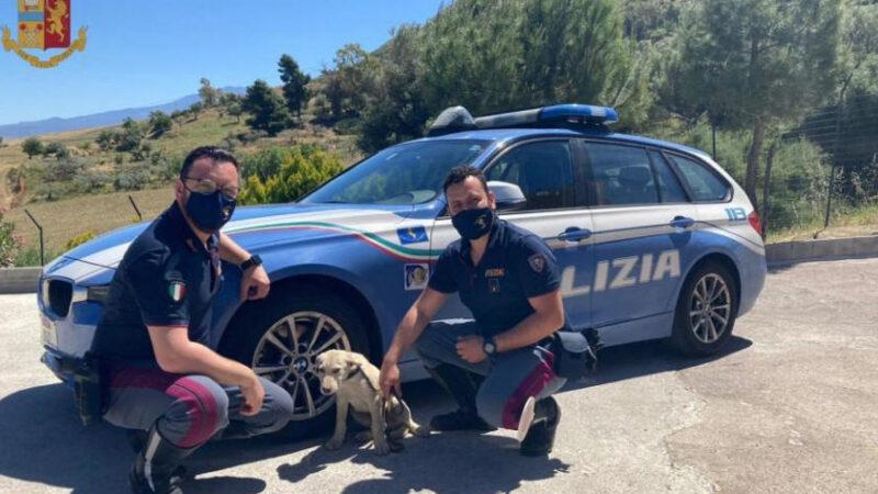 La Polizia di Stato di Enna salva un cagnolino che entrato in autostrada rischiava di morire
