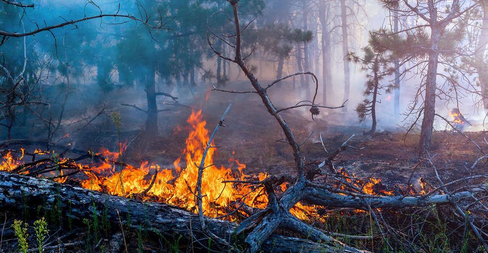 Forestali. Ugl, Ars sblocca 64 milioni per contrasto incendi in Sicilia