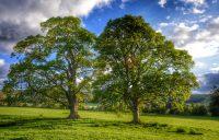 """L'Iniziativa """"Pianta un albero anche tu"""" del coordinamento OPI di Piazza Armerina"""